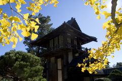 Asian Pagoda. An Asian pagoda tower flanked by fall colored tree limbs Stock Image