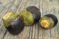Asian Palmyra palm, Toddy palm, Sugar palm, Cambod Stock Images