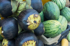 Asian Palmyra palm, Toddy palm with watermelons Royalty Free Stock Photos