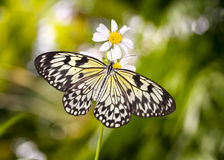 Asian Paper Kite Butterfly Royalty Free Stock Image
