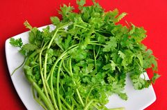 Asian Parsley Stock Images