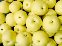 Asian pear. A group of asian pear Stock Images
