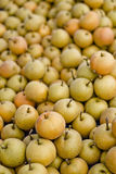 Asian Pear Royalty Free Stock Photos