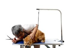Groomer. The Asian pet groomer standing on the white background Royalty Free Stock Photos