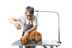 Groomer. The Asian pet groomer standing on the white background Royalty Free Stock Images