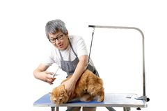 Groomer. The Asian pet groomer standing on the white background Royalty Free Stock Photography