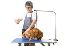 Groomer. The Asian pet groomer standing on the white background Royalty Free Stock Image