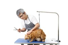 Groomer. The Asian pet groomer standing on the white background Stock Photos