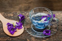 Asian pigeonwings or Butterfly Pea Heabal hot drinking tea refresh Thai herb Stock Photos