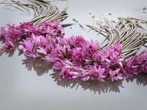 Asian pink lotus flower Royalty Free Stock Image