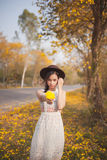 Asian pretty girl surrounded by the yellow flowers in summer.  Royalty Free Stock Images