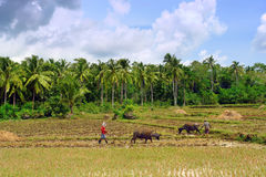 Asian primitive farming Royalty Free Stock Image