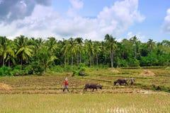 Asian primitive farming royalty free stock image