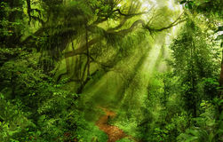 Asian rain forest. With sun rays Stock Photo