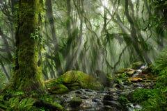 Asian rain forest. With sun rays Stock Photos