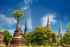 Asian religious architecture. Ancient ruins with growing trees. Thailand Stock Images