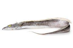 Ribbonfish Royalty Free Stock Image