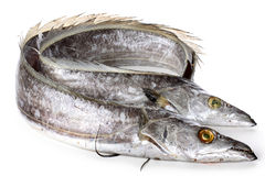 Ribbonfish Stock Photos