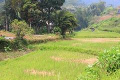 Asian rice field in Sumatra Stock Photos