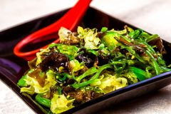 Asian salad with wakame seaweed. On black plate Royalty Free Stock Images