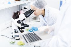 Asian Scientist Using Microscope royalty free stock photo