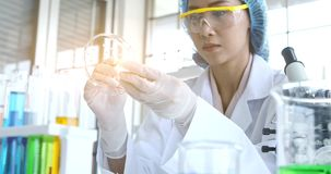 Asian scientists collected specimens for her experiments stock footage