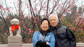 Asian senior couple with cherry blossom Stock Images