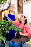 Asian senior couple smiling while watering green cultivated plan Stock Images
