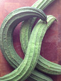 Asian silk squash Royalty Free Stock Photo