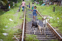 Asian smiling carefree girl plays on railway lines Stock Images