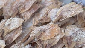 Asian street food - Dried squid. Sun dried seafood at night market and walking street in Chiang Mai., Thailand