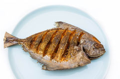 Asian style deep fried pomfret on dish in white isolated backgro Royalty Free Stock Photos