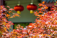 Asian temple. In Auckland, New Zealand stock photography