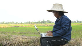 Asian Thai farmer using laptop computer in the rice field stock video footage