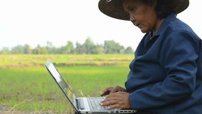 Asian Thai farmer using laptop computer in the rice field stock footage