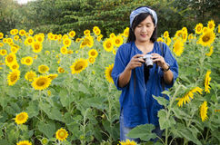 Asian thai woman use camera shooting photo sunflower flower field Stock Photography