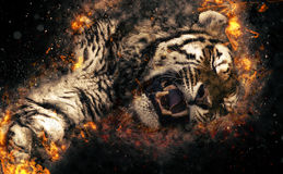 Asian tiger, fire illustration. Asian tiger head on abstract fire background. Fire illustration Stock Image