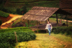 Asian tourists woman on view point at Tea garden doi angkhang T. Portrait of Asian tourists woman on view point at Tea garden doi angkhang Thailand stock photo