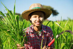 Asian traditional farmer Royalty Free Stock Photo