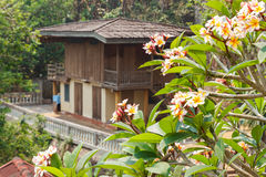 Asian traditional wooden house with the plumeria Stock Photos