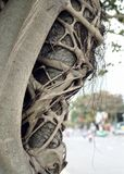 Asian tree with strange branches. Asian exotic  tree with tangled branches on a street with white light Royalty Free Stock Photos