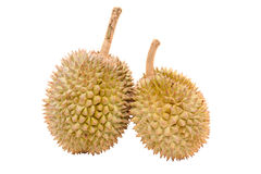 Asian tropical fruit known as Durian Stock Photography