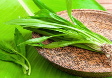 Asian tropical parsley Stock Photos