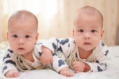 Asian twin boys Stock Image