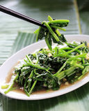 Asian Vegetable Dish. Asian Chinese Cooking Style Stir Fry Vegetable Dish on White Plate royalty free stock photo