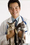 Asian Veterinarian. Young Asian male Veterinarian holding 2 kittens Stock Images