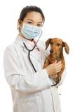 Asian veterinarian Stock Images