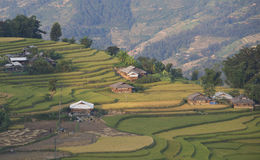 Asian village landscape in a rural area with paddy field Stock Photo