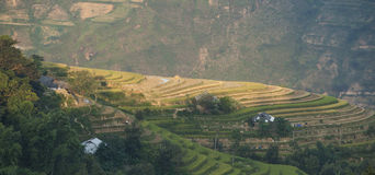 Asian village landscape in a rural area with paddy field Royalty Free Stock Images