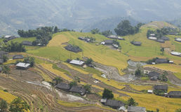 Asian village landscape in a rural area with paddy field Royalty Free Stock Photos